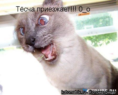 Котоматрица: Тёсча приезжает!!! 0_о