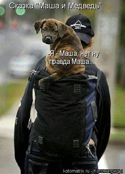 "Котоматрица: Сказка ""Маша и Медведь"" -Я - Маша, нет ну  правда Маша..."