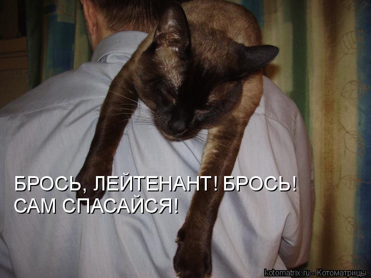 Котоматрица: БРОСЬ, ЛЕЙТЕНАНТ! БРОСЬ! САМ СПАСАЙСЯ!
