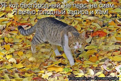 Котоматрица: Я- кот беспородный, не перс, не сиам... Я вечно голодный задира и хам!