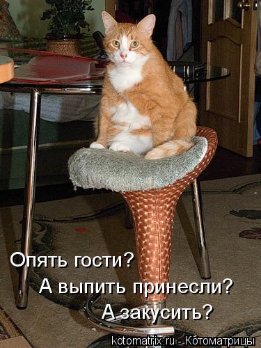 Котоматрица: Опять гости? А выпить принесли? А закусить?