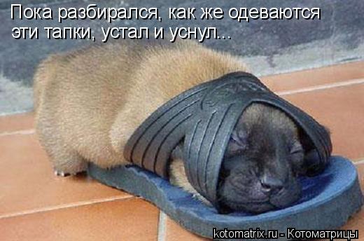 Котоматрица: Пока разбирался, как же одеваются эти тапки, устал и уснул...
