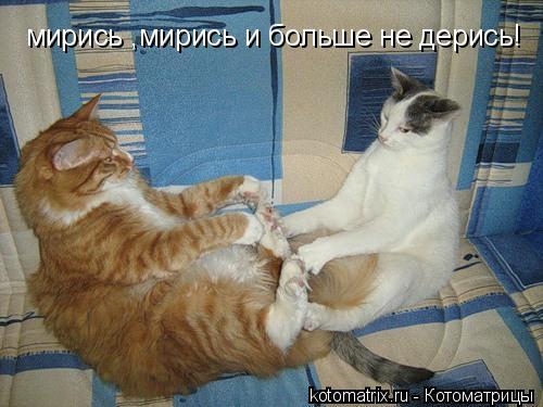 Котоматрица: мирись ,мирись и больше не дерись!