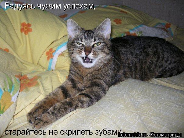Котоматрица: Радуясь чужим успехам,  старайтесь не скрипеть зубами