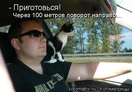 Котоматрица: - Приготовься! Через 100 метров поворот направо...