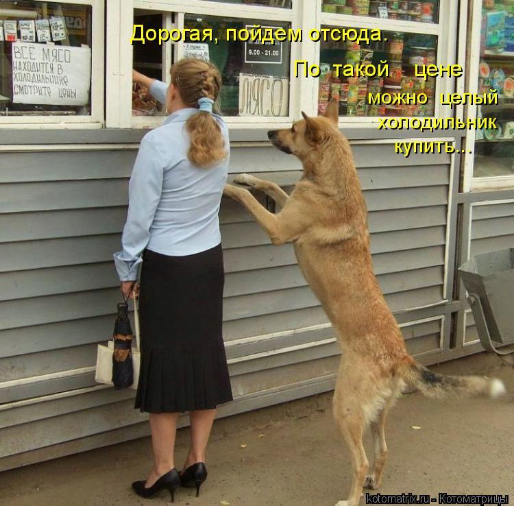 Котоматрица: Дорогая, пойдем отсюда. По  такой    цене  можно  целый  холодильник  купить...