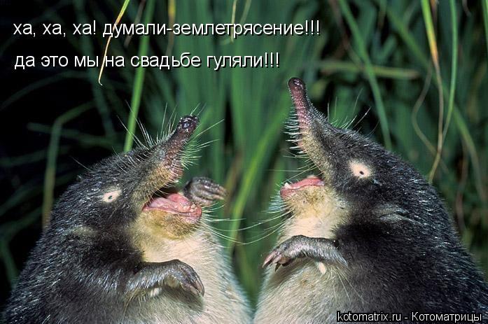 Котоматрица: ха, ха, ха! думали-землетрясение!!! да это мы на свадьбе гуляли!!!
