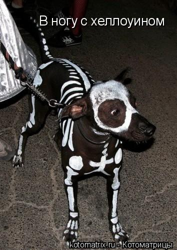 Котоматрица: В ногу с хеллоуином