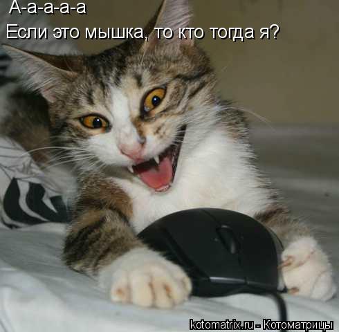 Котоматрица: А-а-а-а-а  Если это мышка, то кто тогда я?