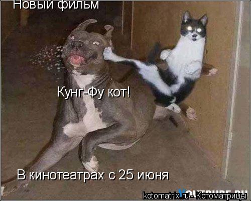 Котоматрица: Новый фильм Кунг-Фу кот! В кинотеатрах с 25 июня