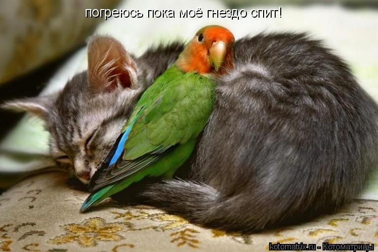 Котоматрица: погреюсь пока моё гнездо спит!