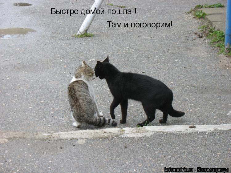 Котоматрица: Быстро домой пошла!!  Там и поговорим!!