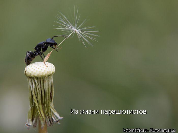 Котоматрица: Из жизни парашютистов