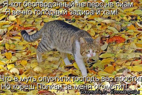 Котоматрица: Я-кот беспардонный не перс,не сиам Я вечно голодный задира и хам! Что в муть опустили,господь вас простит Но кореш Полкан,за меня отомстит!