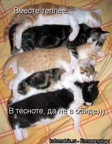 Котоматрица: В тесноте, да не в обиде))) Вместе теплее...
