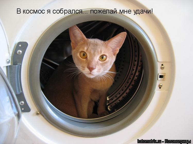 Котоматрица: В космос я собрался... пожелай мне удачи!