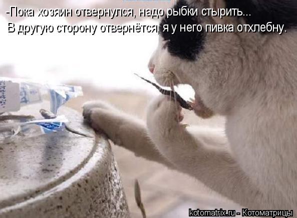 Котоматрица: -Пока хозяин отвернулся, надо рыбки стырить... В другую сторону отвернётся, я у него пивка отхлебну.