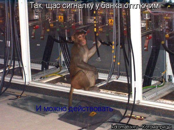 Котоматрица: Так, щас сигналку у банка отключим И можно действовать