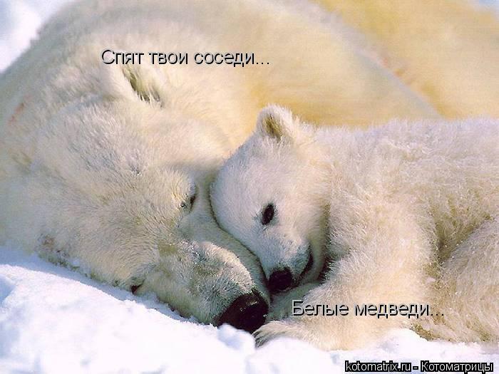 Котоматрица: Спят твои соседи... Белые медведи...