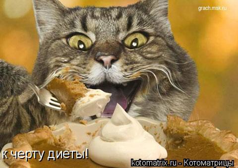 Котоматрица: к черту диеты!