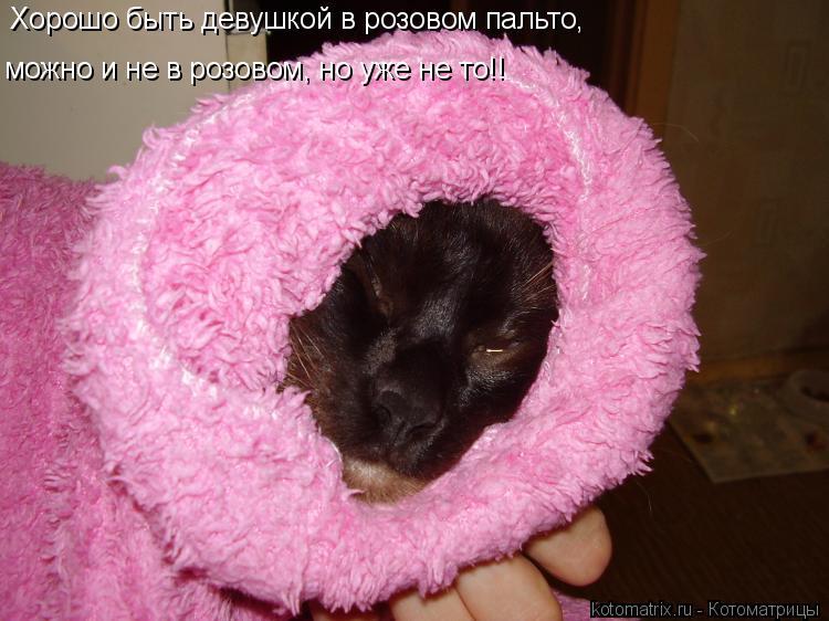 Котоматрица: Хорошо быть девушкой в розовом пальто, можно и не в розовом, но уже не то!!