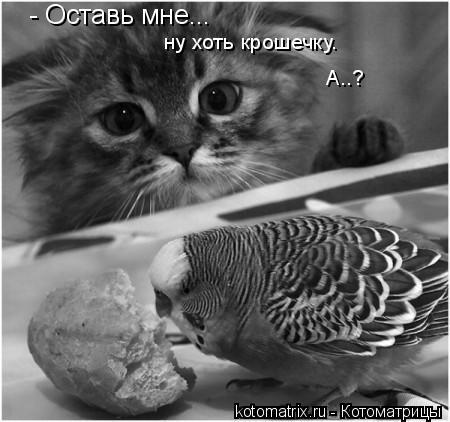 Котоматрица: - Оставь мне... ну хоть крошечку.  А..?