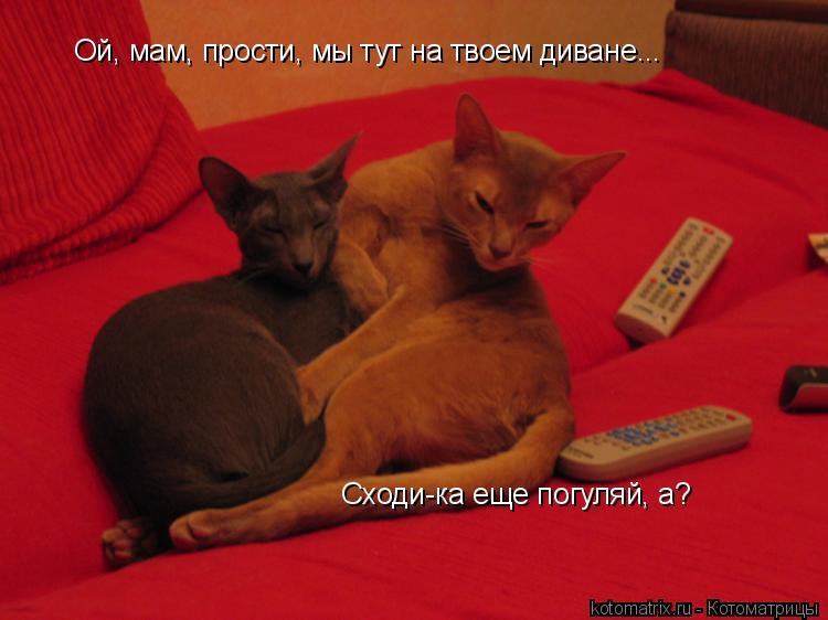 Котоматрица: Ой, мам, прости, мы тут на твоем диване... Сходи-ка еще погуляй, а?