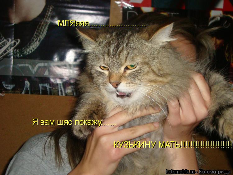 Котоматрица: МЛЯяяя......................... Я вам щяс покажу....... КУЗЬКИНУ МАТЬ!!!!!!!!!!!!!!!!!!!!!!1