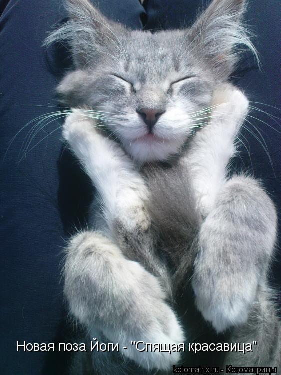 "Котоматрица: Новая поза Йоги - ""Спящая красавица"""