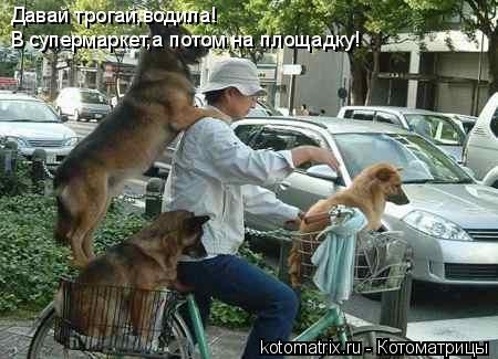 Котоматрица: Давай трогай,водила! В супермаркет,а потом на площадку!