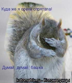 Котоматрица: Куда же я орехи спрятала! Думай, думай, башка...