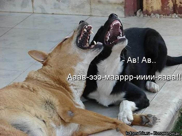 Котоматрица: - Ав! Ав.. Ааав-эээ-мааррр-ииии-яааа!!!