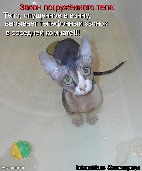 Котоматрица: Закон погружённого тела: Тело, опущенное в ванну, вызывает телефонный звонок в соседней комнате!!!