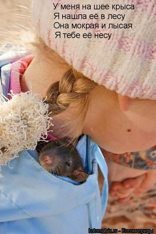 Котоматрица: У меня на шее крыса Я нашла её в лесу Она мокрая и лысая Я тебе её несу