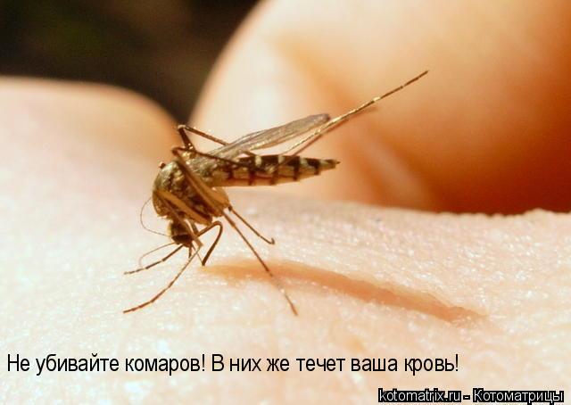 Котоматрица: Не убивайте комаров! В них же течет ваша кровь!