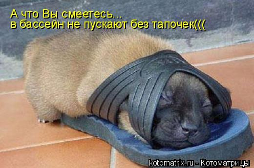 Котоматрица: А что Вы смеетесь... в бассейн не пускают без тапочек(((