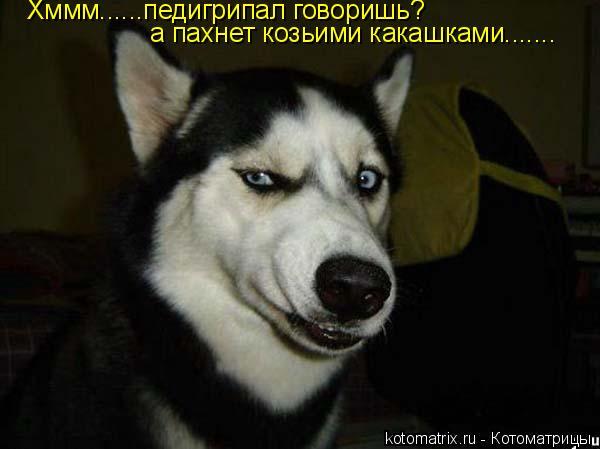 Котоматрица: Хммм......педигрипал говоришь? а пахнет козьими какашками.......