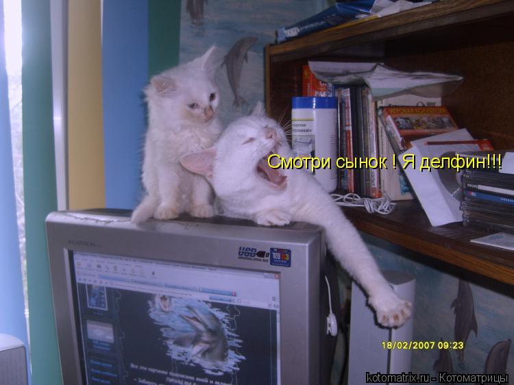 Котоматрица: Смотри сынок ! Я делфин!!!