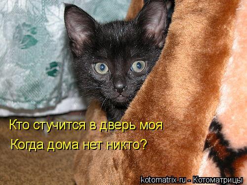 Котоматрица: Кто стучится в дверь моя Когда дома нет никто?
