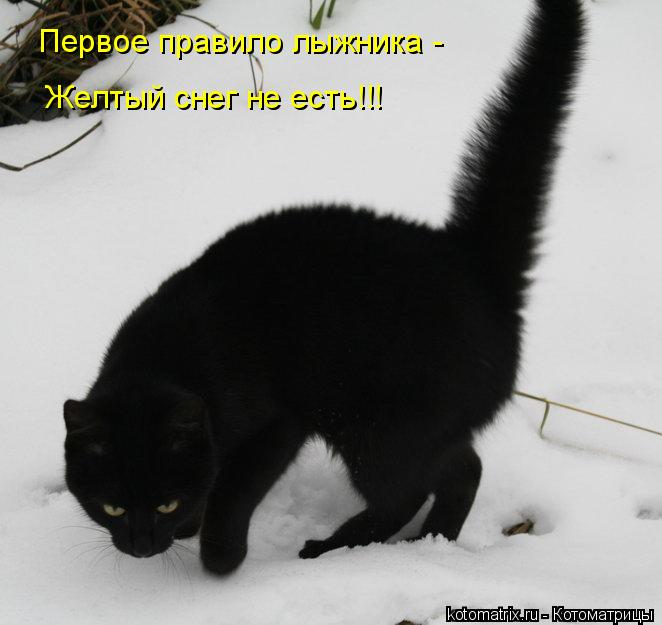 Котоматрица: Первое правило лыжника - Желтый снег не есть!!!