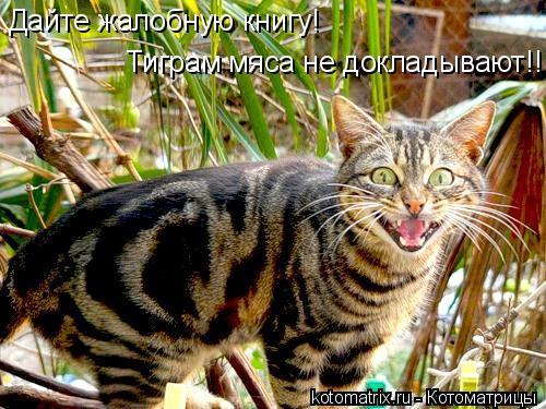 Котоматрица: Дайте жалобную книгу! Тиграм мяса не докладывают!!!