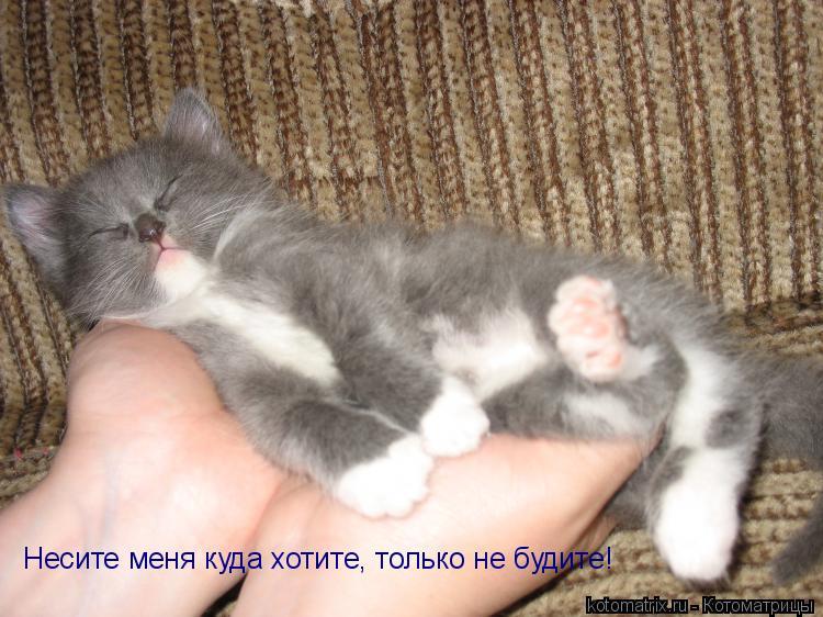 Котоматрица: Несите меня куда хотите, только не будите!