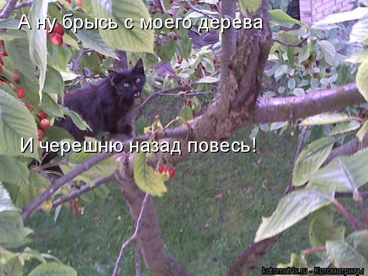 Котоматрица: А ну брысь с моего дерева И черешню назад повесь!