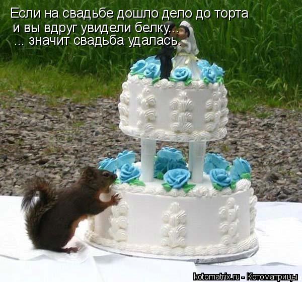 Котоматрица: Если на свадьбе дошло дело до торта и вы вдруг увидели белку... ... значит свадьба удалась.