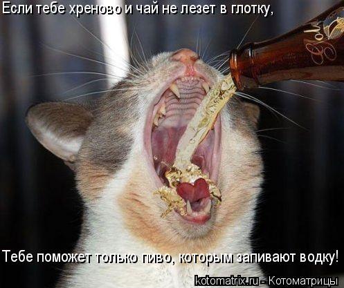Котоматрица: Если тебе хреново и чай не лезет в глотку,  Тебе поможет только пиво, которым запивают водку!