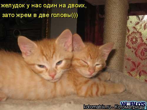 Котоматрица: желудок у нас один на двоих,  зато жрем в две головы)))
