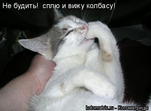 Котоматрица: Не будить!  сплю и вижу колбасу!