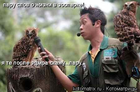 Котоматрица: пару слов о жизни в зоопарке! я те после эфира скажу...пару...