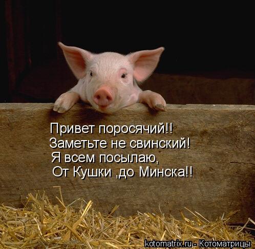 Котоматрица: Привет поросячий!! Заметьте не свинский! Я всем посылаю, От Кушки ,до Минска!!