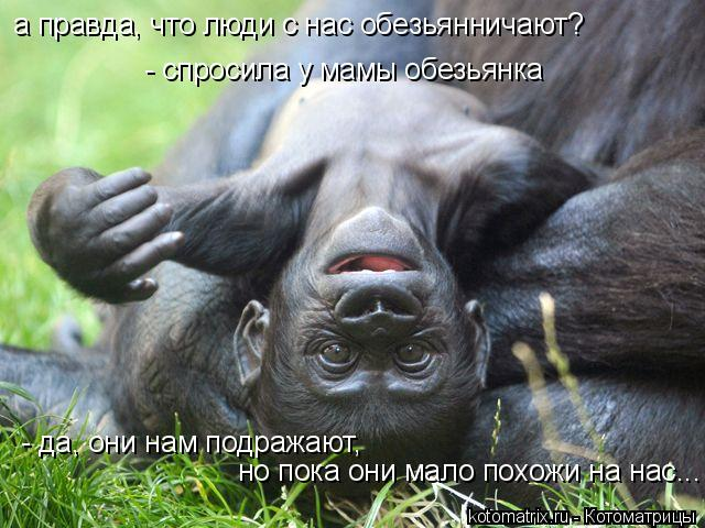 Котоматрица: а правда, что люди с нас обезьянничают?  - спросила у мамы обезьянка - да, они нам подражают,  но пока они мало похожи на нас...